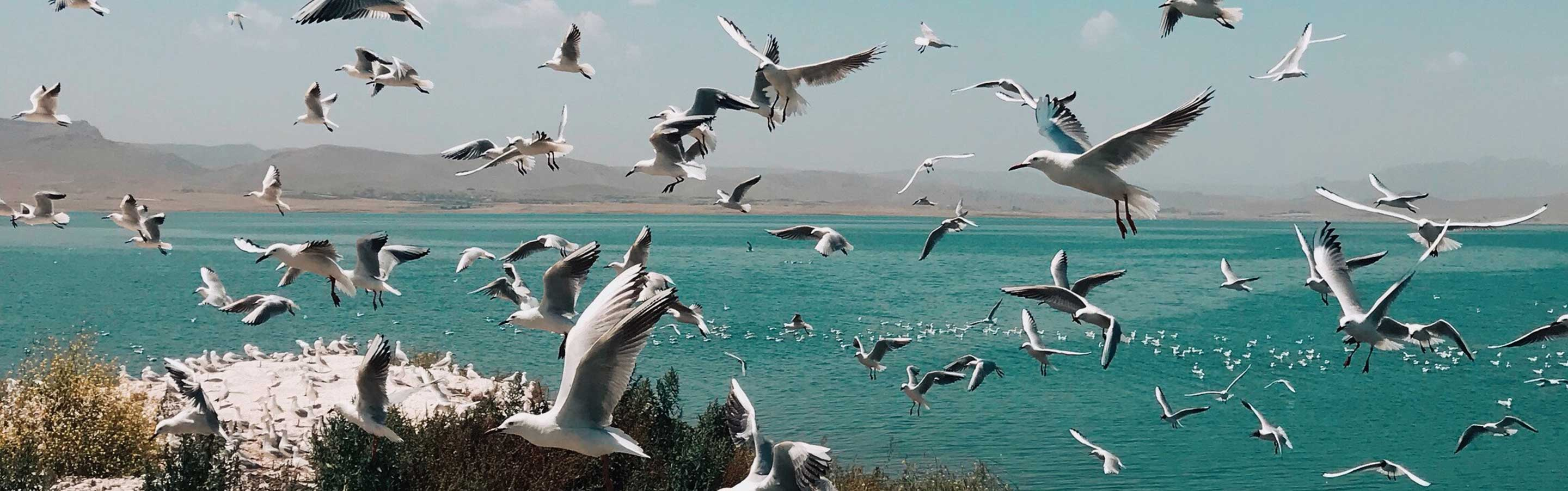 Seagulls fly at the beach
