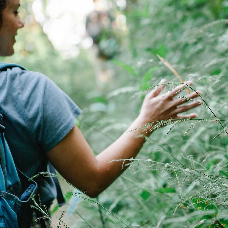 A woman's hands touching grass on a trail